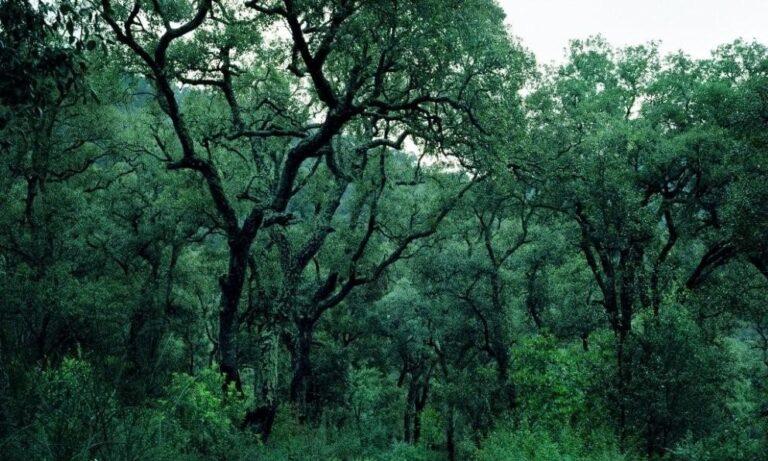 Il Parco Naturale Montseny